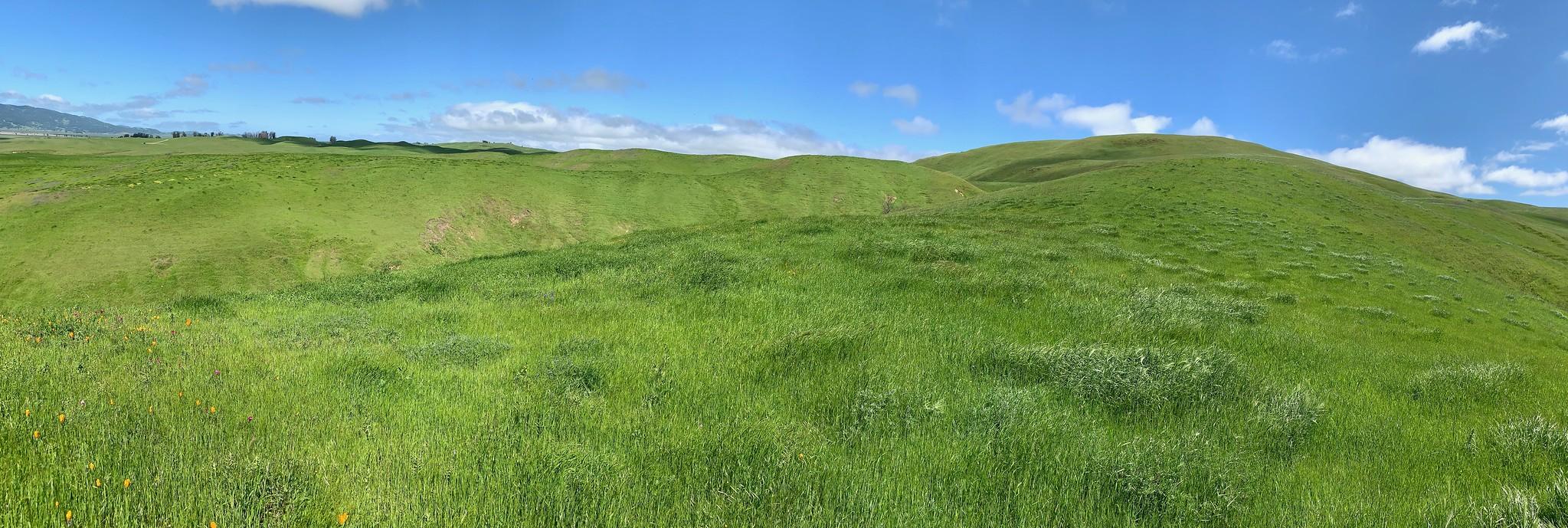 hillside panoroma