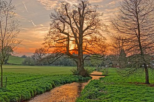 sunset dusk evening tree stream water reflection grass park sky cloud abinger surrey ghe