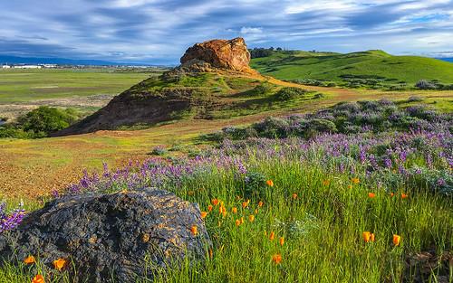 coyotehillsregionalpark fremont california ebparksok ch