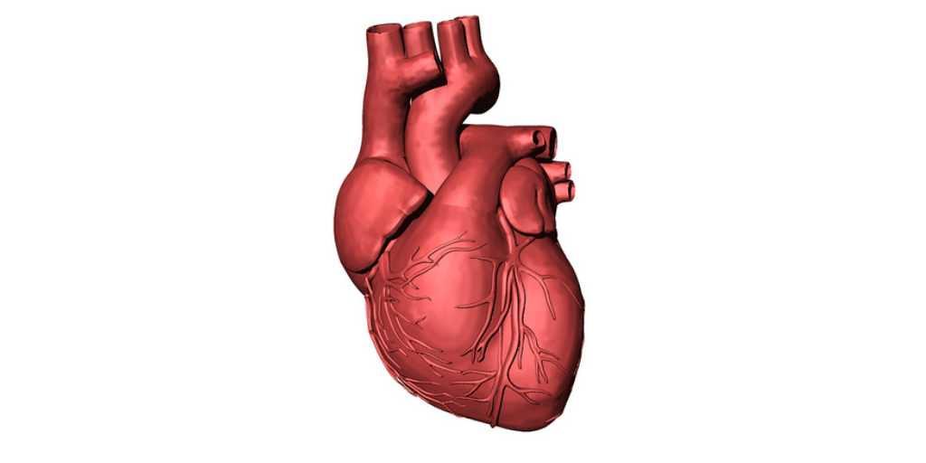 impression-3d-organes-humains