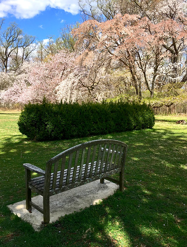 baltimore maryland cylburnarboretum parks gardens trees blossoms benches hbm iphone