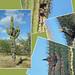 Saguaro Nests