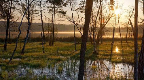 lake swamp sunrise sun sunlight nature morning water trees zurich switzerland