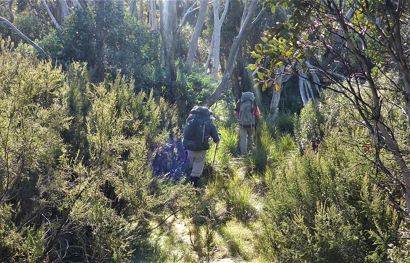 Dwarfed by vegetation