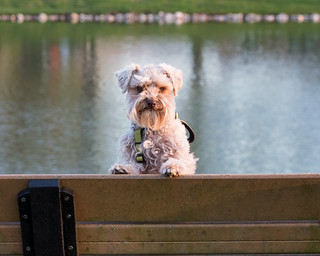 Quincy at the park | by Cheryl3001
