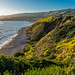 View of the Oceanside Cliff Covered with Wildflowers Superbloom at the Ocean Trails Reserve at Trump National Golf Club by SCSQ4