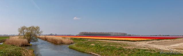 Panorama Polder Dirksland