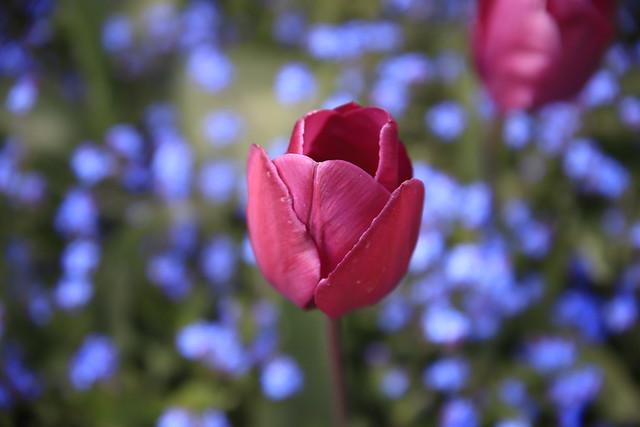 La beauté est la fleur du bonheur....