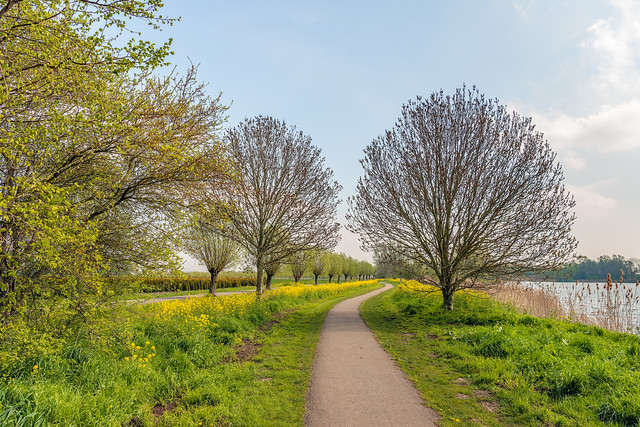 Meandering path through a colorful spring landscape