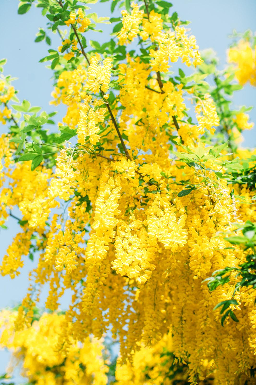 chain tree-4