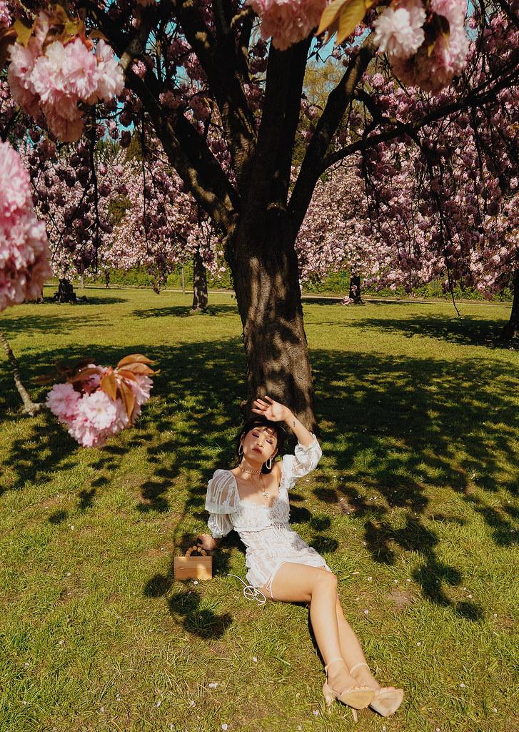 daydream under cherry tree