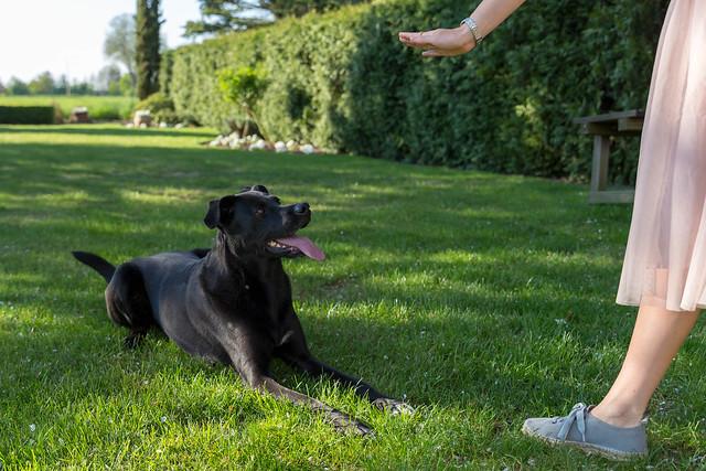 Frauchen trainiert mit ihrem schwarzen Labradorhund das Kommando