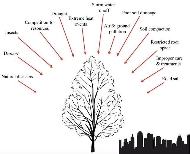Tree stressors