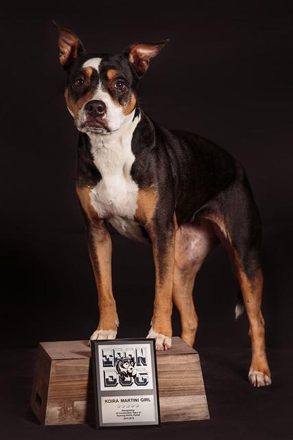 Koira Iron Dog-0399-1