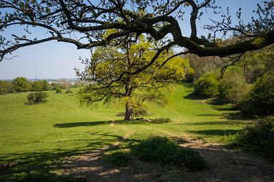 Under a Shady Tree