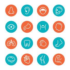 Human Anatomy Cirlce Icons