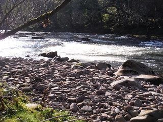 Scene from Footpath along River Usk through Llangynidr SWC Walk 332 Llangynidr to Bwlch or Circular [Riverside Walk Alternative]