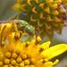 pólen! by abelhário