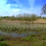 Haslam Park wetlands