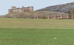 D3736-Castillo de Berlanga de Duero (Soria)