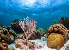 Underwater natural garden ... of animals!