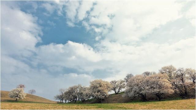 Frühlings-Schnee