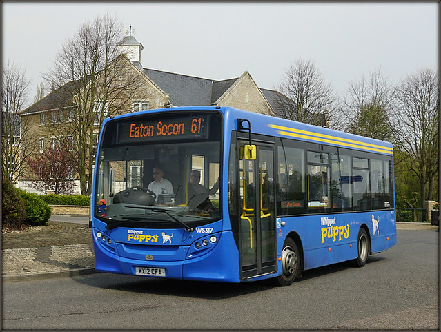 Whippet WS317