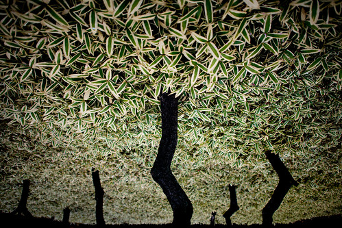 0001_Japan-trees-plants-leaves_20190227_0619