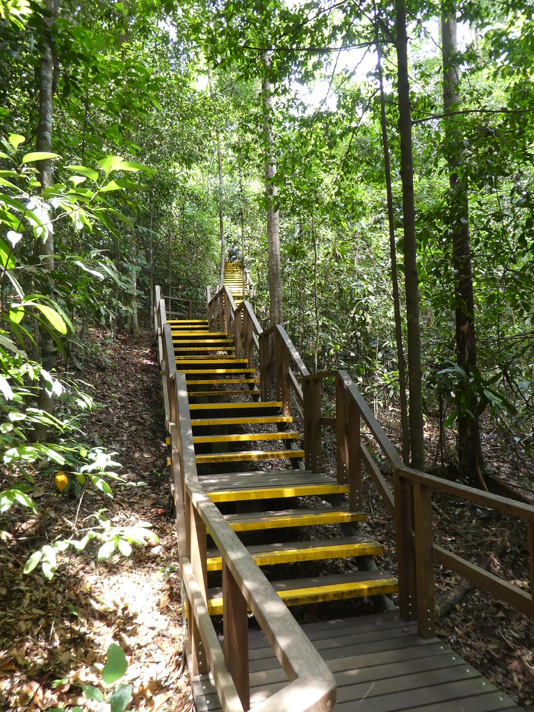 MacRitchie Trail, Singapore