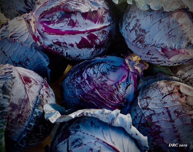 red cabbage at the Farmers Market at Coconut Point