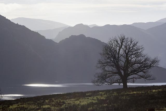 Tree overlooking Ullswater, Lake District National Park, Cumbria, UK