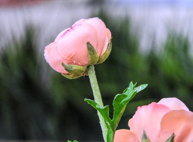 Pinky Power Flower