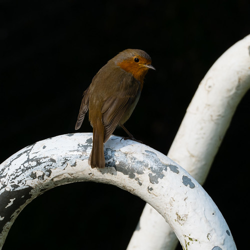 Robin, Wightwick Mill Lock