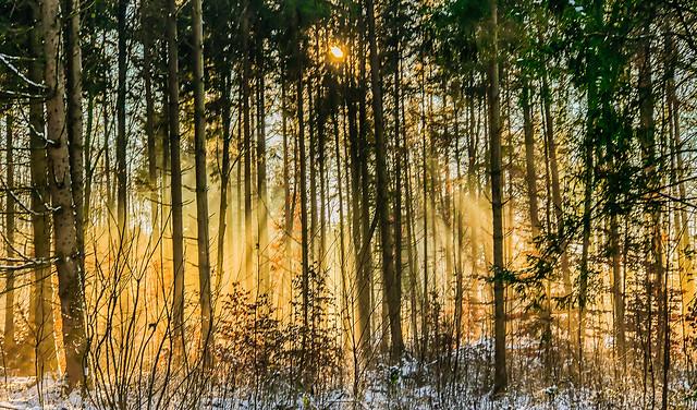 Wonder of Light