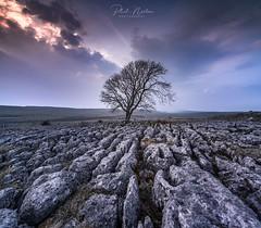Lone Tree- Malham Yorkshire Dales