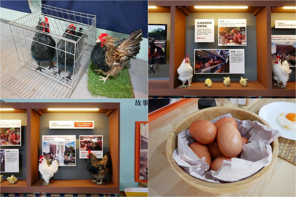 雞的進化史