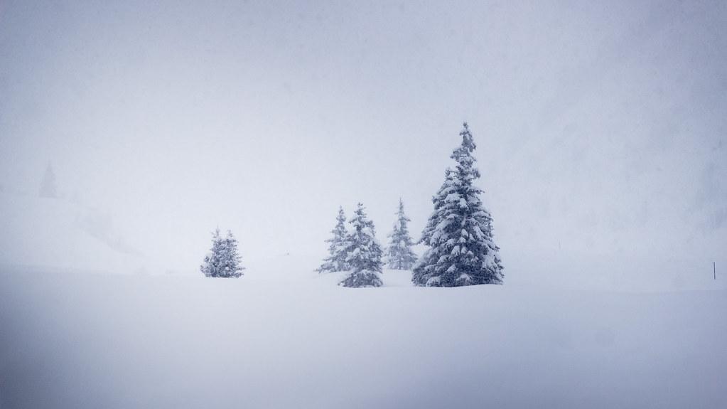 Die Bäume verlassen das Tal ...