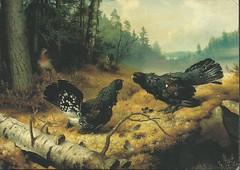 Taistelevat metsot (1886) - Ferdinand von Wright