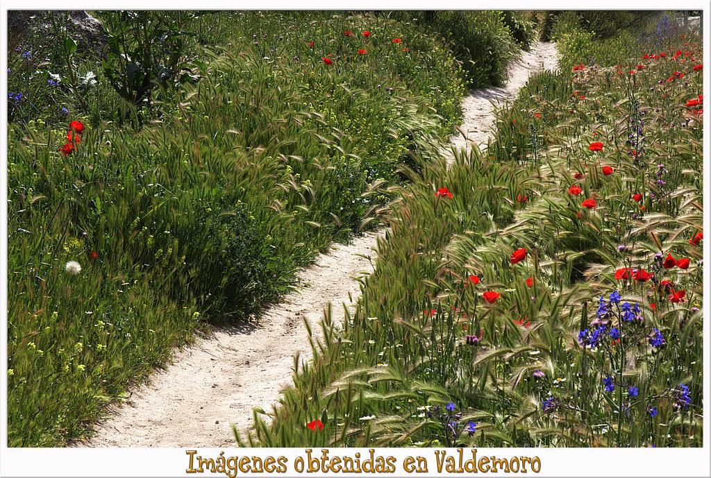 sendero en mayo, campos de Valdemoro,