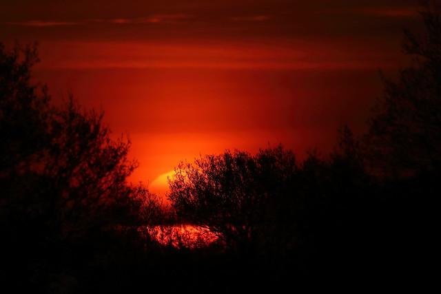 Sunrise at Ham Wall