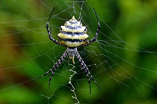 Orb Web Spider | by noelcmn