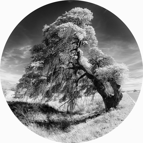 az arizona cochisecounty usa infrared tondo tree coronadomemorialroad