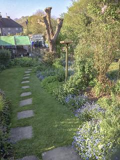 My garden-April