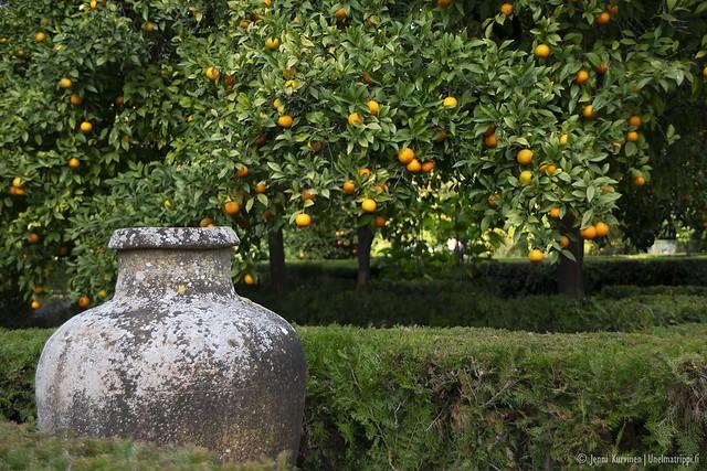 Sevillan Alcázarin puutarhassa