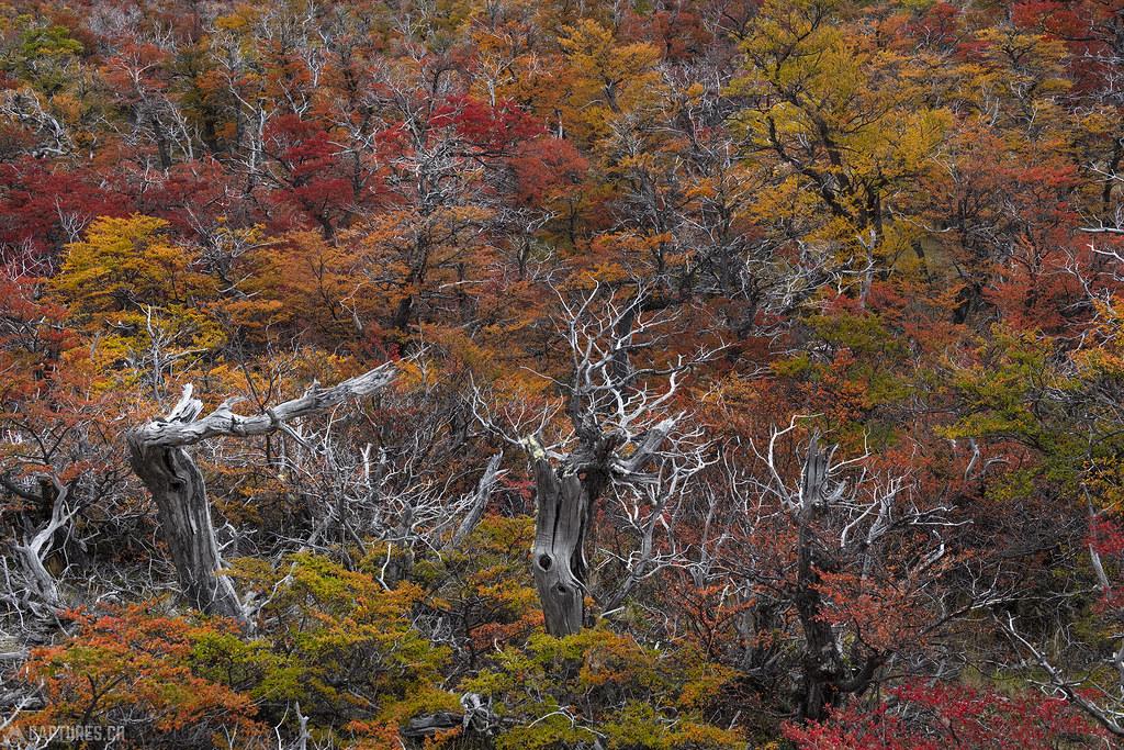 Color forest - El Chalten