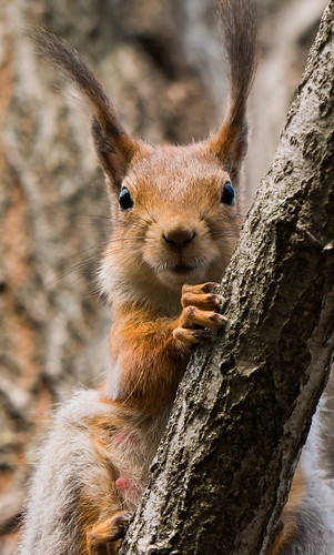 squirrel portrait | by FromMoscowWithLove