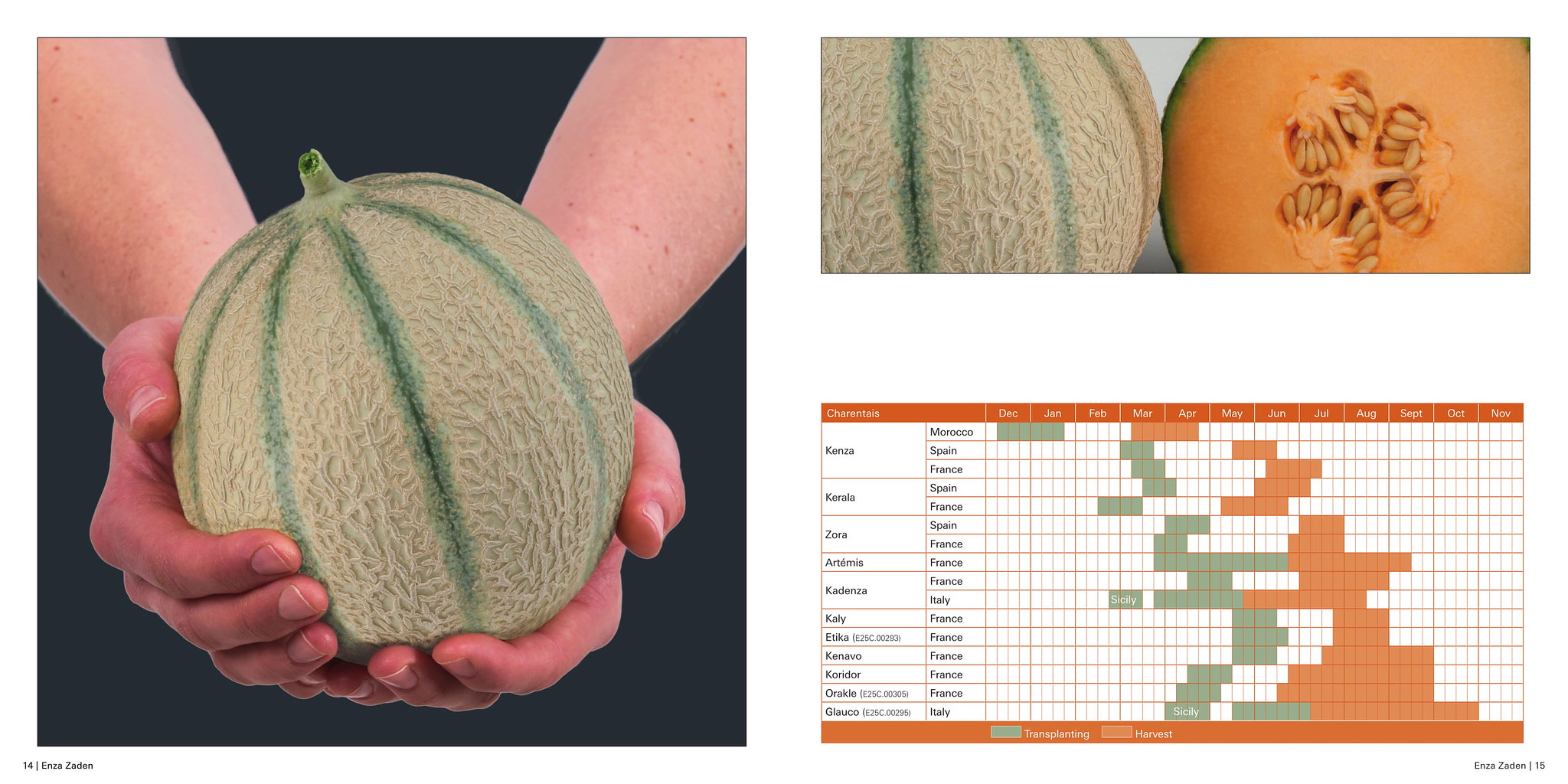 เมล็ดพันธุ์เมล่อน (Melon Seeds)