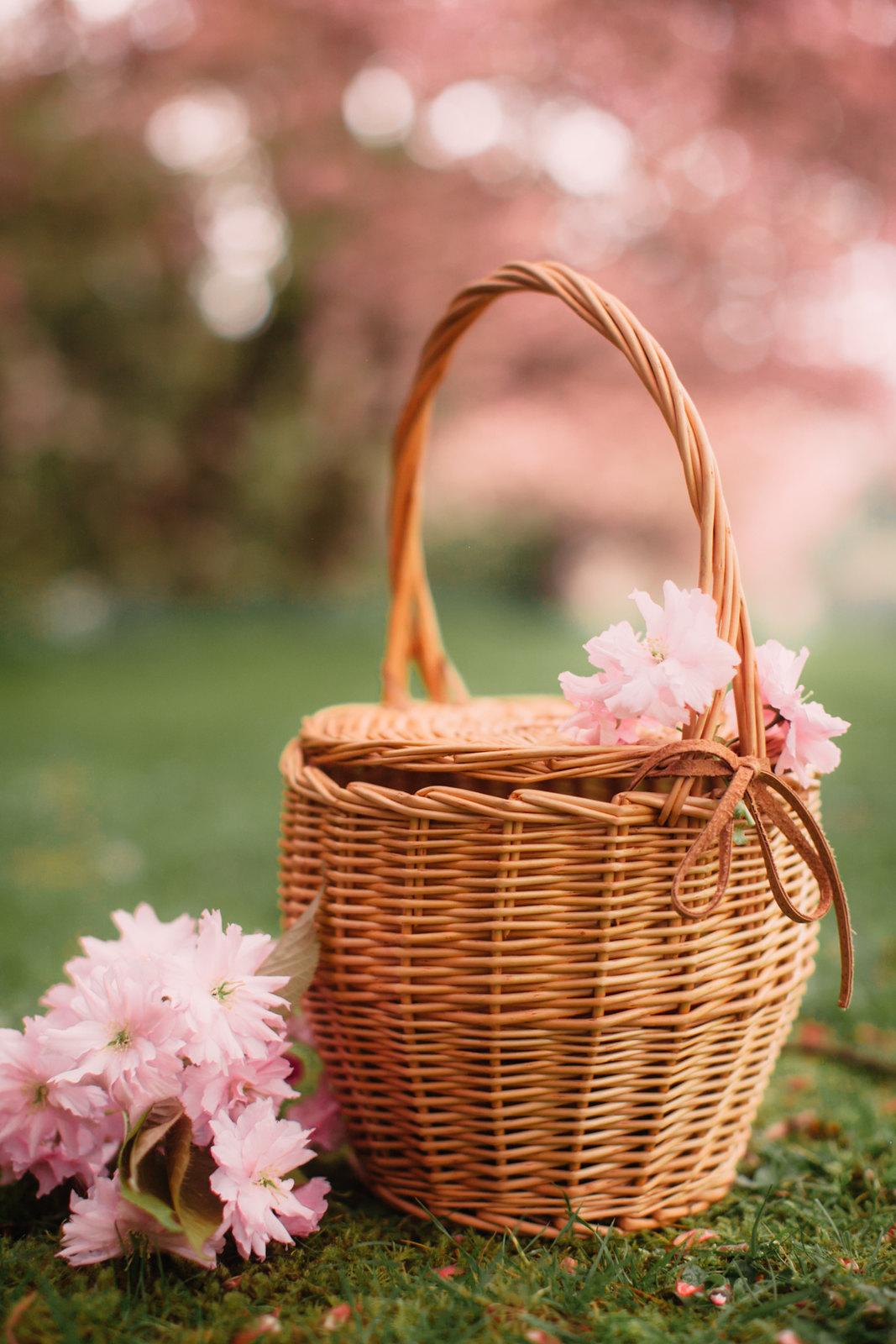 cherry blossom-41
