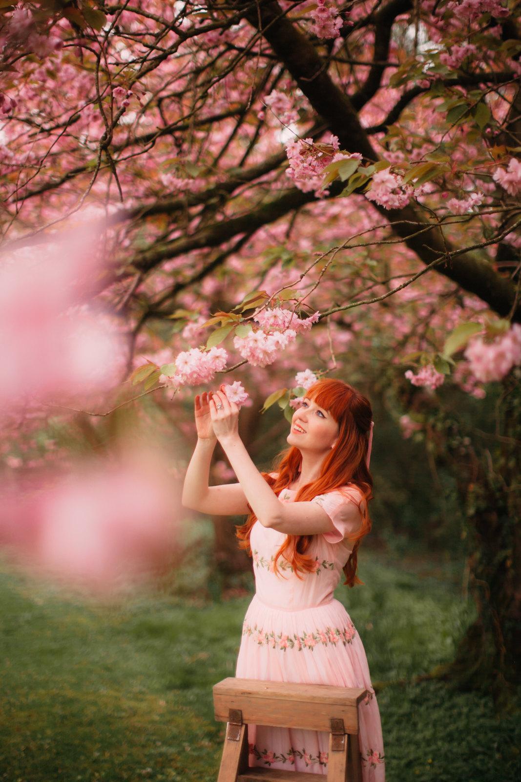 cherry blossom-4
