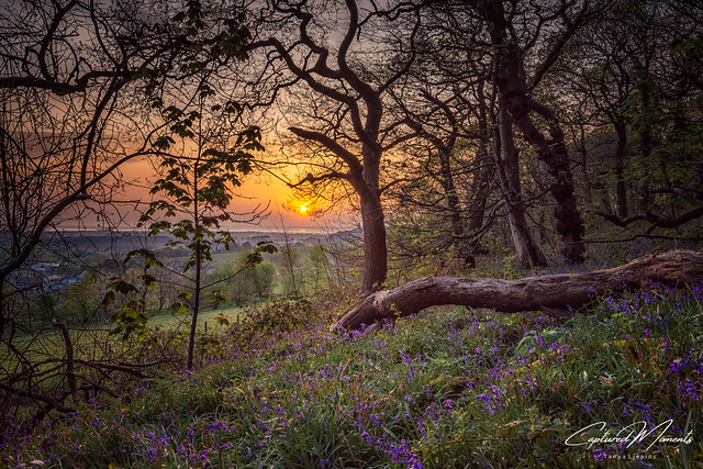 Bluebell wood Gronant . North Wales sunrise .